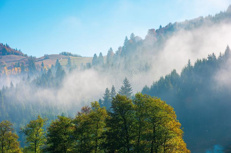 Wonderful autumn weather in mountains. Distant forested hills in hazy mist. sunny morning in carpathians. beautiful nature scenery royalty free stock photos