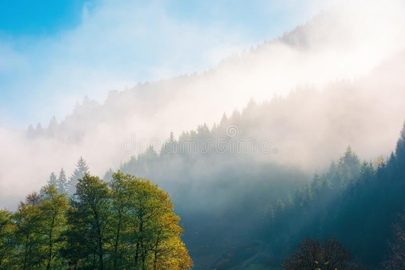 Wonderful autumn weather in mountains. Distant forested hills in thick fog. sunny morning in carpathians. beautiful nature background stock photo