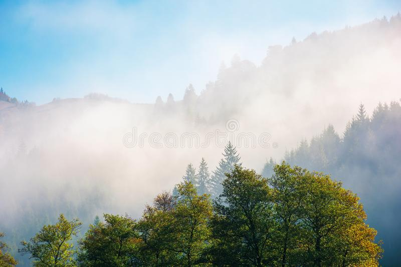 Wonderful autumn weather in mountains. Distant forested hills in thick fog. sunny morning in carpathians. beautiful nature scenery stock image