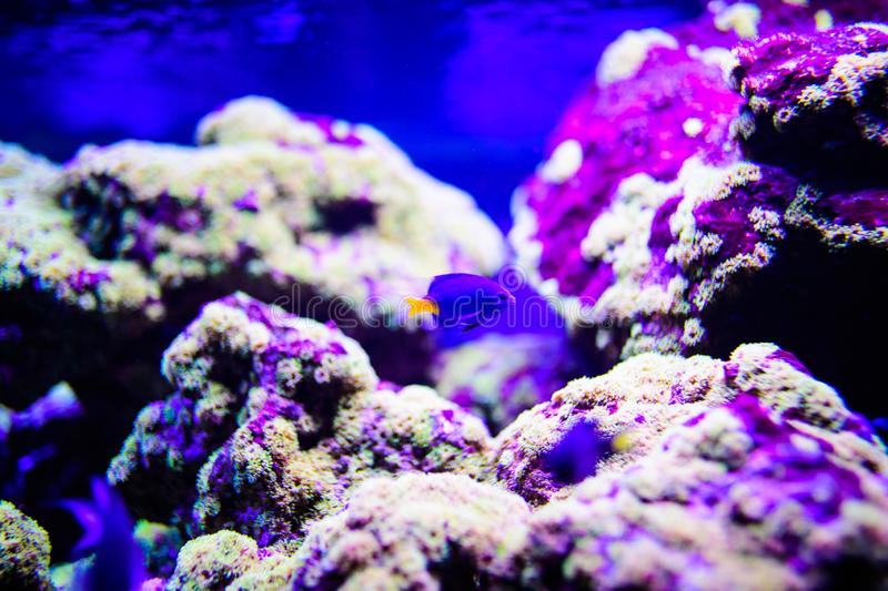Wonderful and beautiful underwater world with corals and tropical fish. Anemone, animal, aquarium, aquatic, background, bahamas, barrier, beauty, blue royalty free stock photography