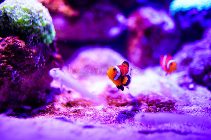 Wonderful and beautiful underwater world with corals and tropical fish. Anemone, animal, aquarium, aquatic, background, bahamas, barrier, beauty, blue stock photos