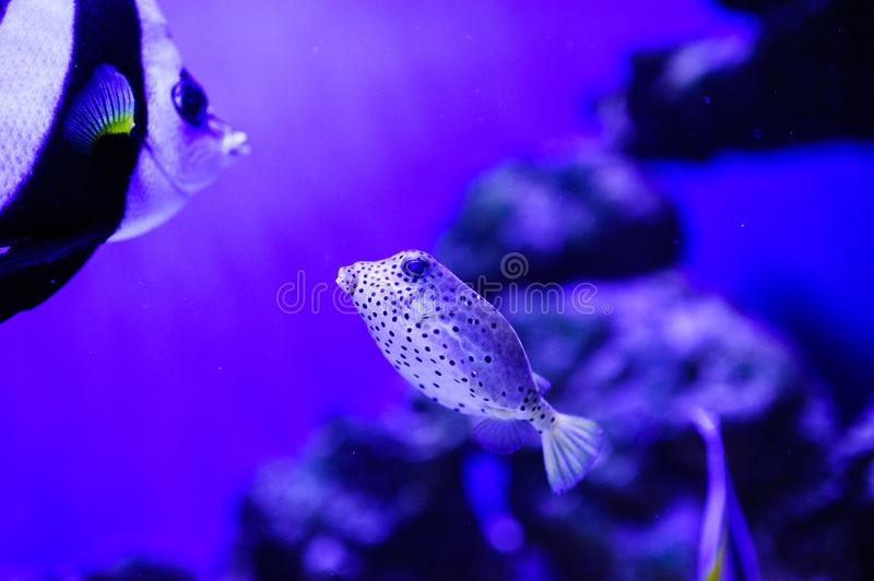 Wonderful and beautiful underwater world with corals and tropical fish. Anemone, animal, aquarium, aquatic, background, barrier, beauty, blue, caribbean, clown stock photography