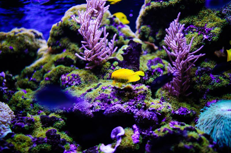 Wonderful and beautiful underwater world with corals and tropical fish. Anemone, animal, aquarium, aquatic, background, barrier, beauty, blue, caribbean, clown stock images