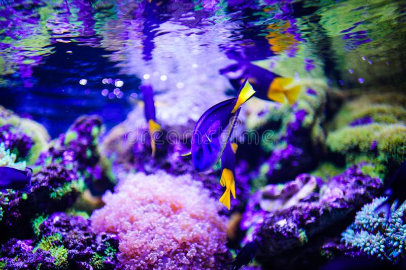 Wonderful and beautiful underwater world with corals and tropical fish. Anemone, animal, aquarium, aquatic, background, barrier, beauty, blue, caribbean, clown stock photos