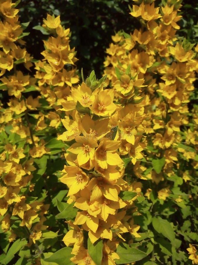 Wonderful and beautiful yellow flowers stock image