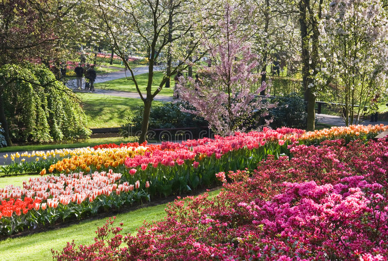 Wonderful blooming spring garden in april. Wonderful spring garden in april with blooming cherry trees, tulips and azalea bushes stock photo