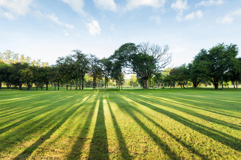 Wonderful and breathtaking green park landscape in the morning royalty free stock images