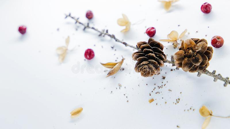 These wonderful and bright photos gives to your website or blog a great atmosphere of magical Christmas. Buy without hesitation! I recommend, not regret it! royalty free stock images
