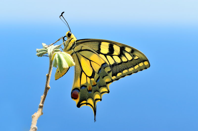Download Wonderful butterfly stock photo. Image of carefree, path - 6038770