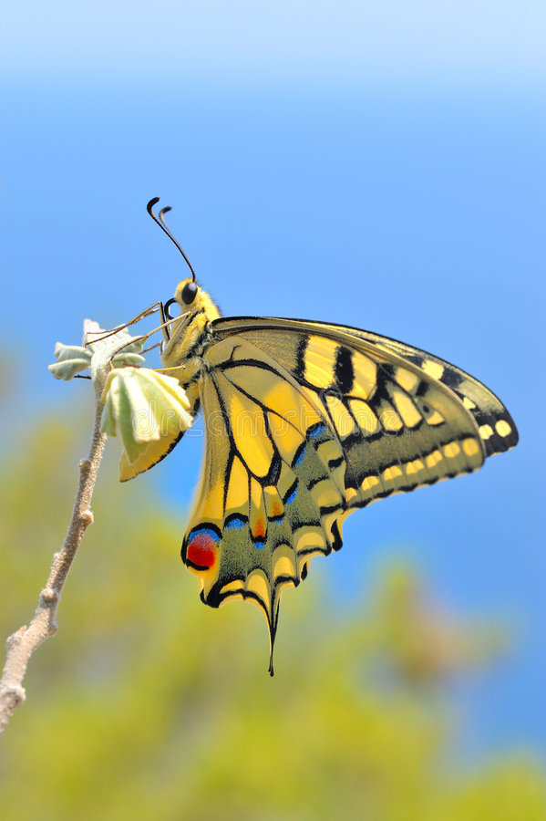 Download Wonderful Butterfly In Nature Stock Photo - Image of green,  butterfly: 7682452