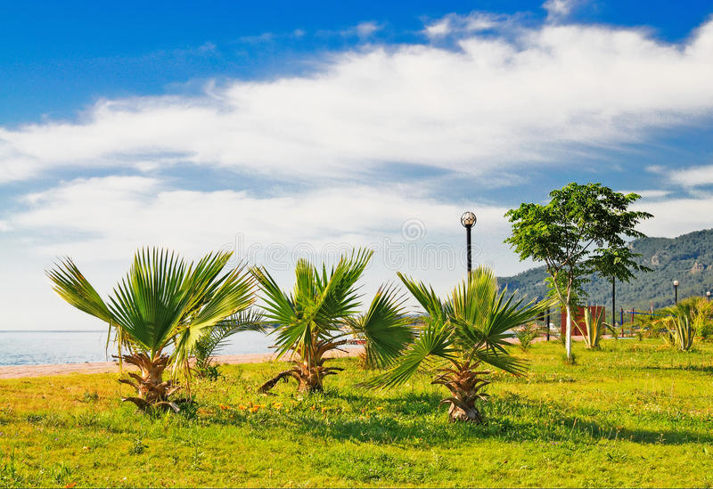 Download Wonderful Clouds Above Tropical Beach. Stock Photo - Image: 10702892