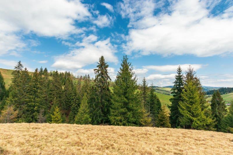 Wonderful countryside in springtime stock photos