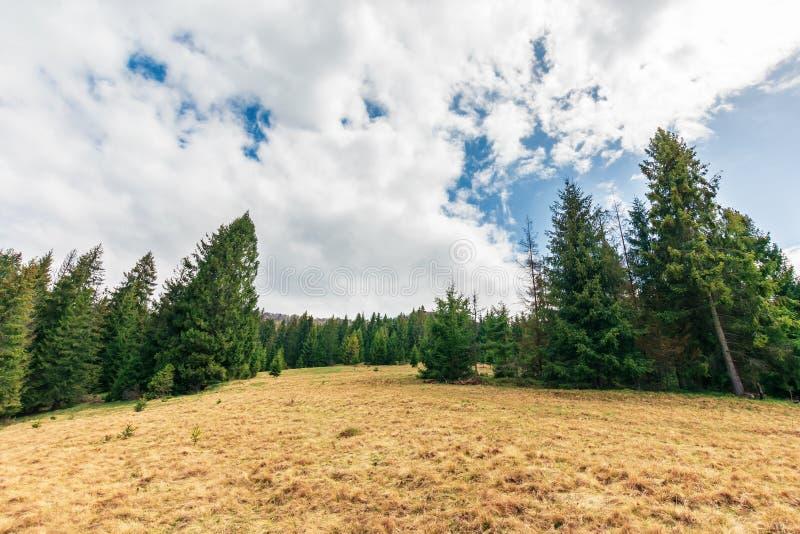 Wonderful countryside in springtime royalty free stock photos