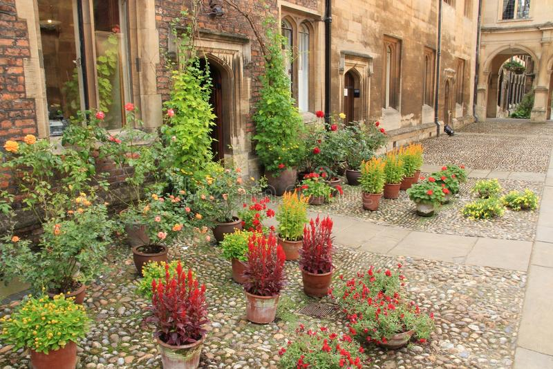 Blooming potted plants of the University in the city Cambridge in England. stock images