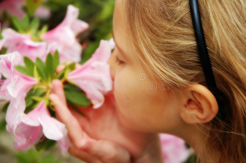 This wonderful flower. Abstract blur of little girl upclose smelling flowers. Camellias shrub royalty free stock photo