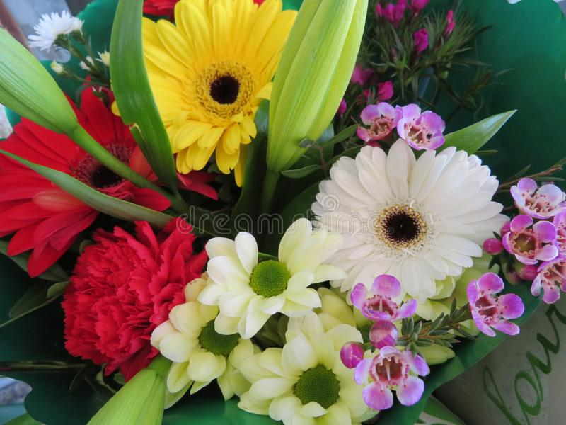 Wonderful flowers with a color and smell so good royalty free stock images