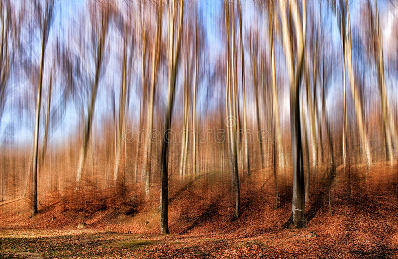 Download Wonderful forest stock image. Image of serbia, trees - 37698973