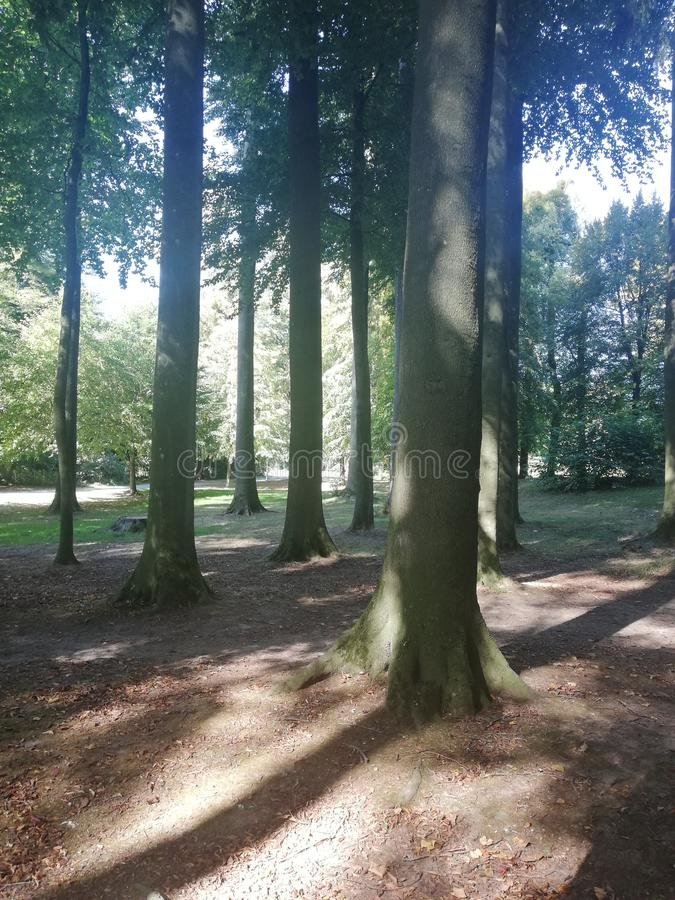 Forest and sun royalty free stock photo