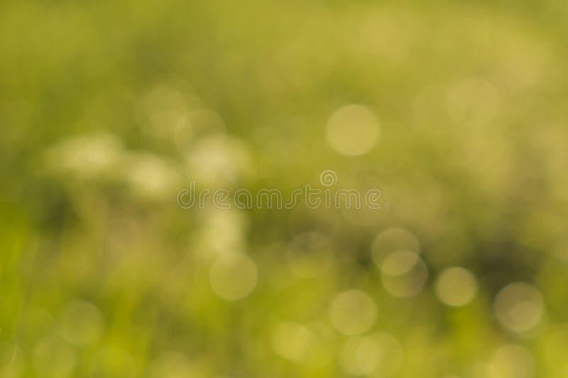 Wonderful green color blurred background. Bokeh photo.  stock photo