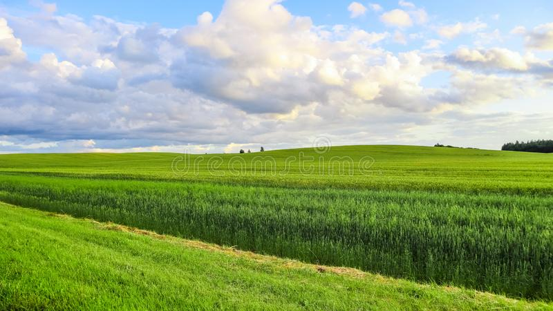 Wonderful green field, hills, trees and blue sky with clouds in the countryside. Spring landscape stock photo