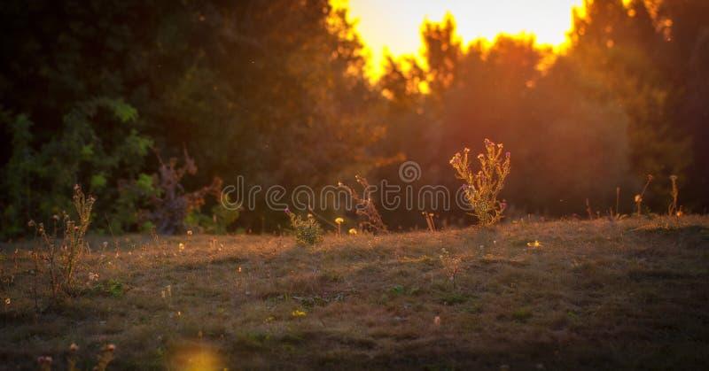 Wonderful landscape, evening meadow flooded with warm sunlight. Bakvground stock photos