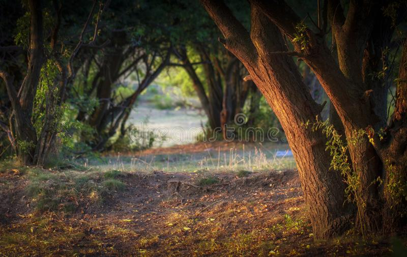 Wonderful landscape, evening meadow flooded with warm sunlight. Bakvground royalty free stock photos