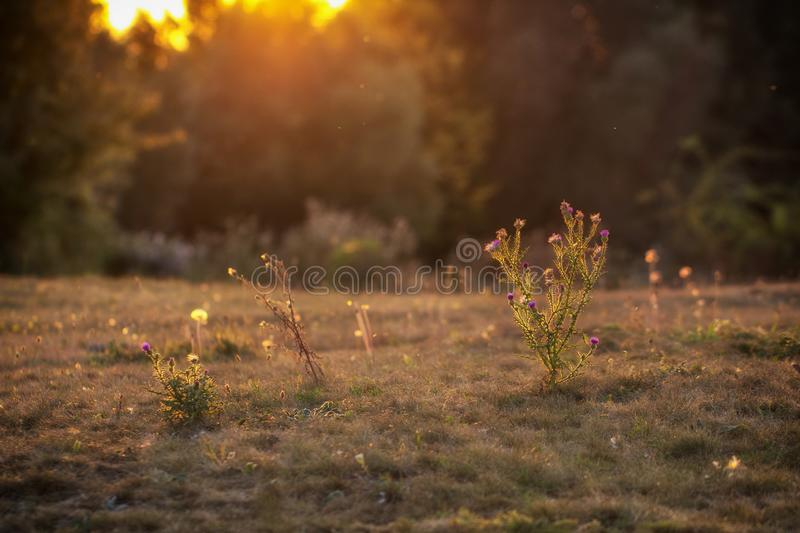 Wonderful landscape, evening meadow flooded with warm sunlight. Bakvground stock image