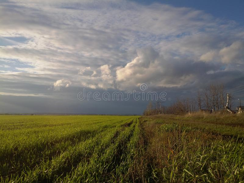 wonderful landscape of green field. royalty free stock images
