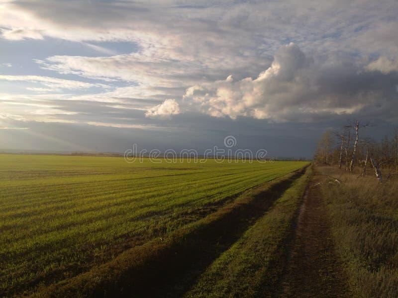 wonderful landscape of green field. stock photos