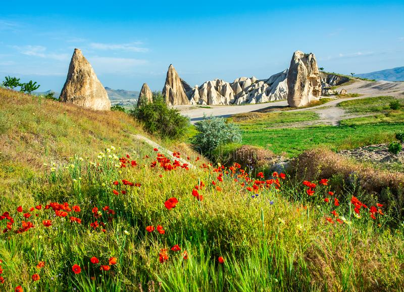 Wonderful landscape with view at fairy chimneys and with flowering poppies in Cappadocia, Anatolia, Turkey. Volcanic mountains in royalty free stock photo