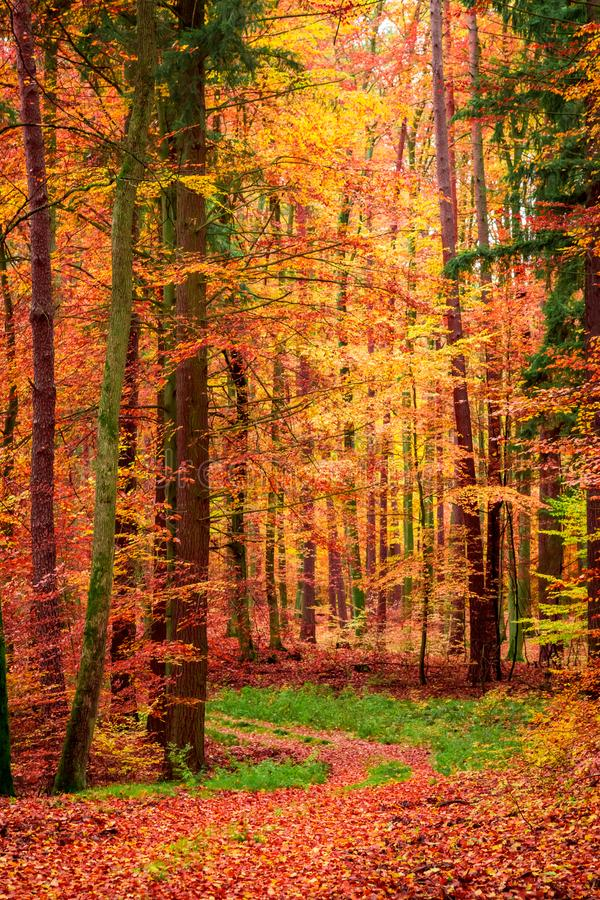 Wonderful leafy path in the forest in fall, Poland. Europe stock photo