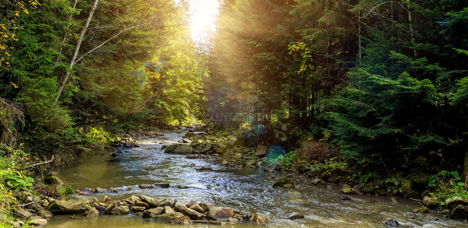Wonderful misty morning on the mountain river. colorful rees glowing in sunlight. Wonderful misty morning on the mountain river. colorful trees glowing in stock photos