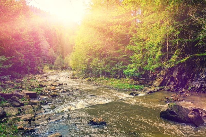 Wonderful misty morning on the mountain river. colorful trees un. Wonderful autumn misty morning on the mountain river. colorful trees glowing in sunlight stock photos