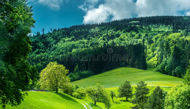 Wonderful mountain forest. Wonderful green mountain meadow with forest on background stock photography