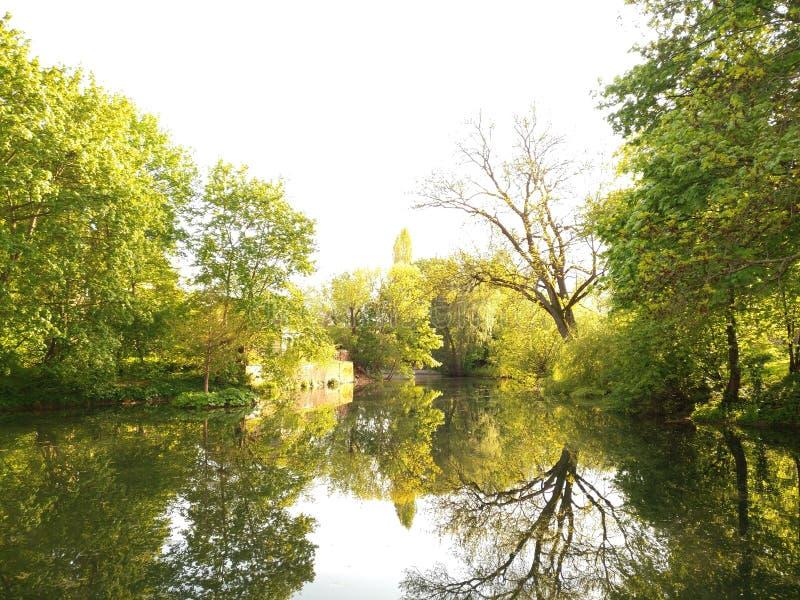 Wonderful nature royalty free stock photo
