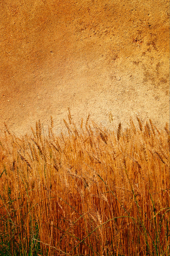 Wonderful old wall and ripe wheat pasted on it. royalty free stock photos