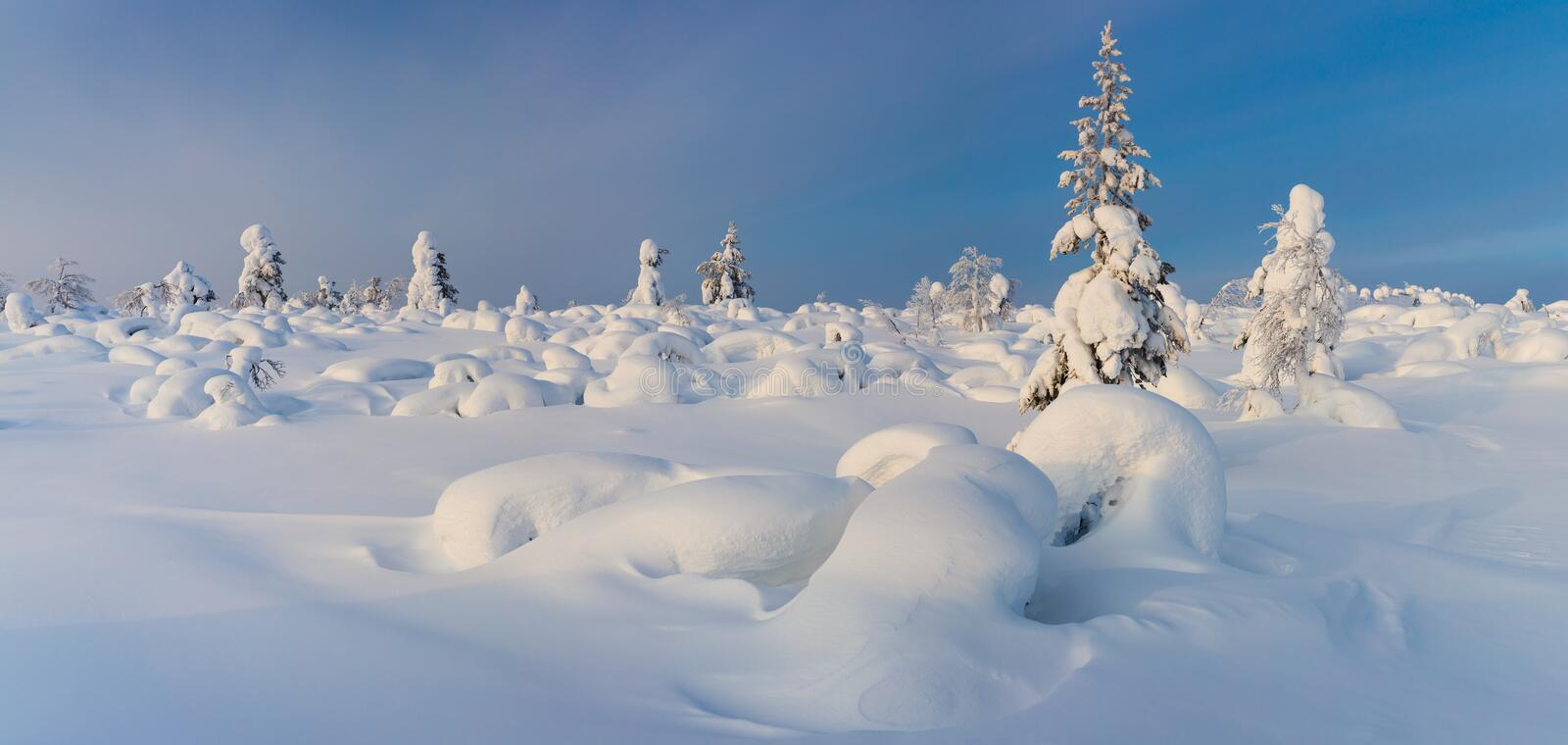 Wonderful Panoramic Landscape of Northern Winter Nature. A lot of snow and snow covered trees, beautiful weather royalty free stock photo