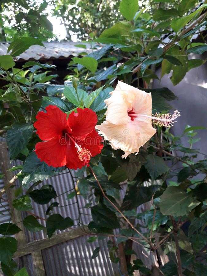 Wonderful peace of flower hanging on the cute tree royalty free stock image