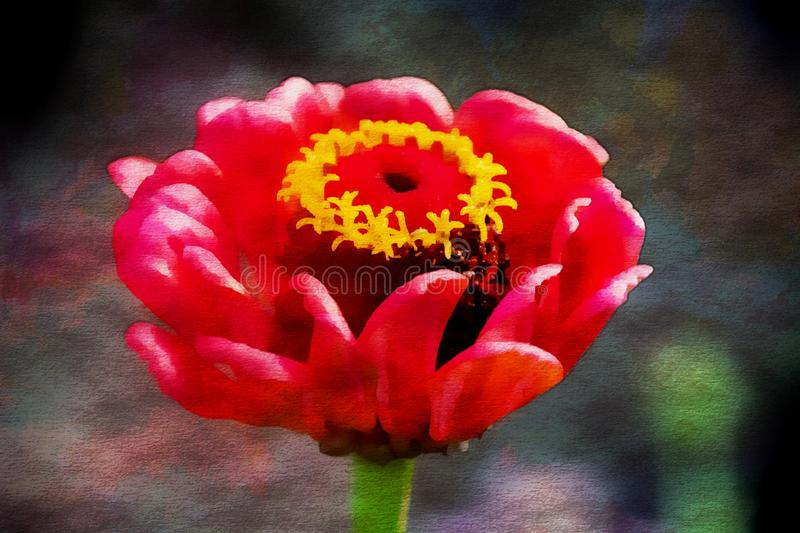 Wonderful red autumn flower, oil painting royalty free illustration
