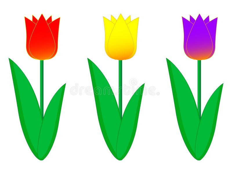 A wonderful simple design of colored spring tulips royalty free illustration
