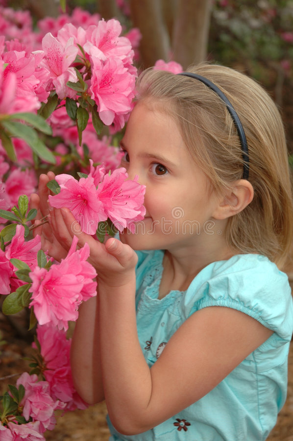 Wonderful Springtime Flowers. Little girl inhales the wonderful scent of spring time camellias royalty free stock image