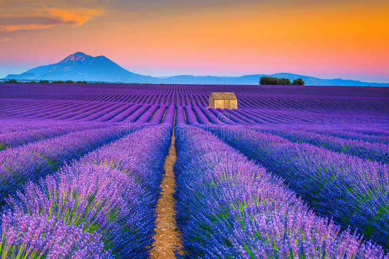 Wonderful summer landscape with lavender fields in Provence, Valensole, France. Picturesque summer nature landscape and agriculture area. Popular travel and royalty free stock photos