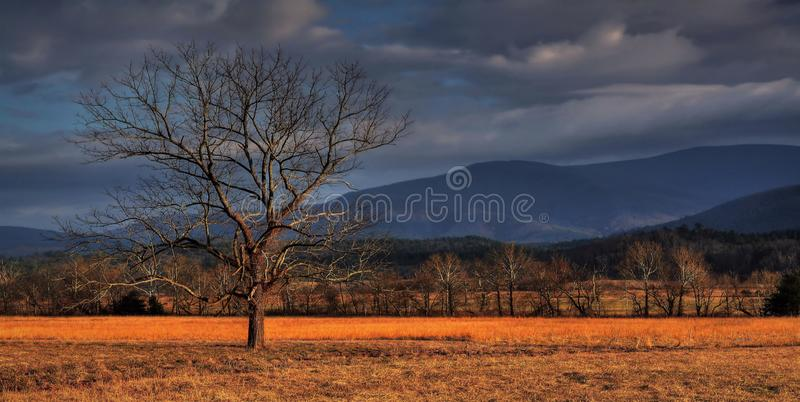 Twilight In Cades Cove stock photo