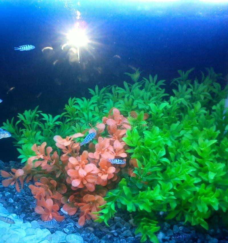 Wonderful under water sence stock image