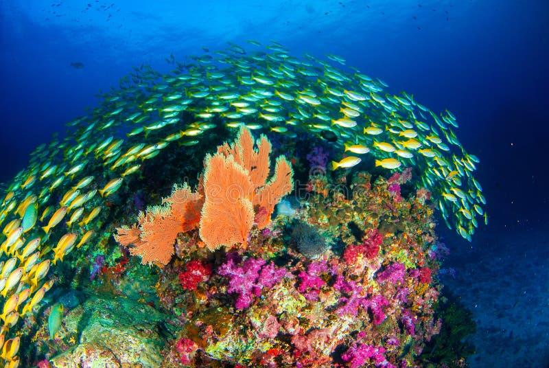 Wonderful underwater world. stock photos