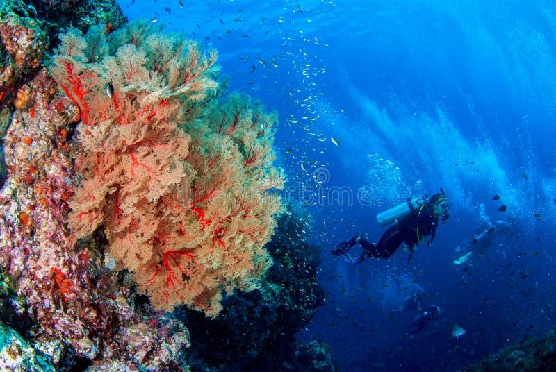 Wonderful underwater world. stock photography