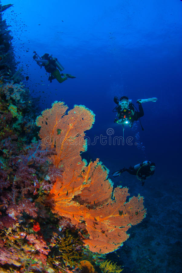 Wonderful underwater world with young woman scuba diving. stock photo