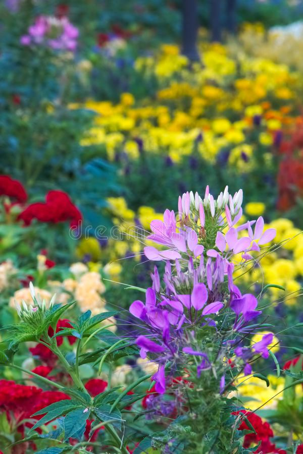 Wonderful view of a variety of newly planted, beautiful flowers in a Thai garden park. royalty free stock photo
