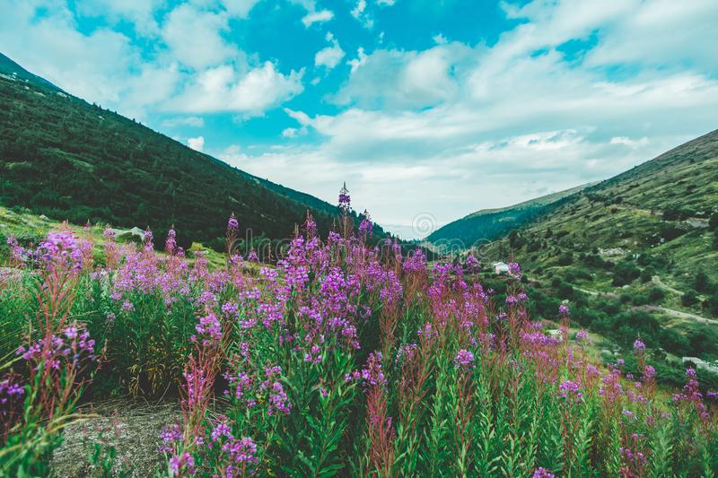 Wonderful views of the Pirin Mountains stock images