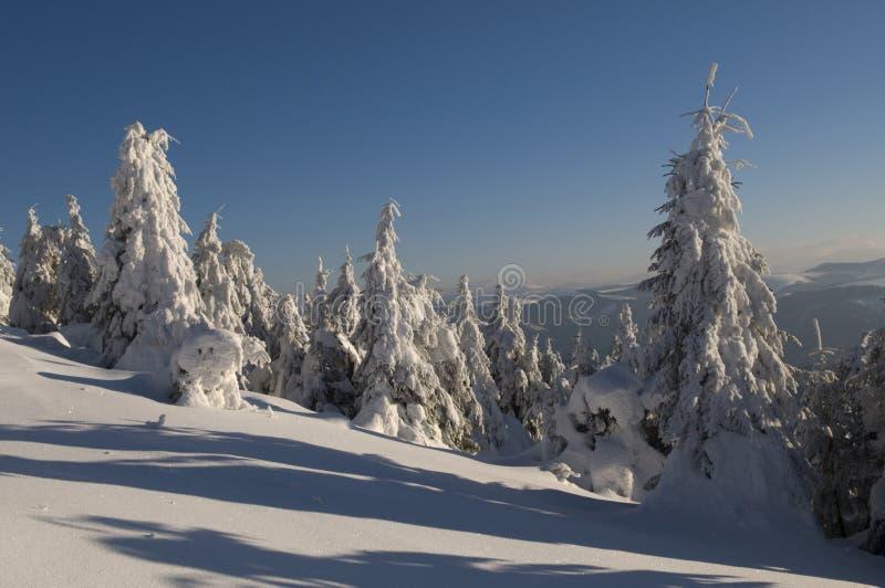 Wonderful Winter Royalty Free Stock Image